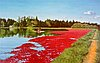 """""""Cranberry Harvest"""" oil painting by Kent Holloway, 1999."""