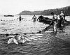 Seine fishing, lower Columbia River, about 1900.